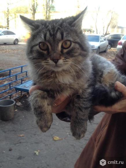 Ищет дом котенок-мальчик. Фото 3.