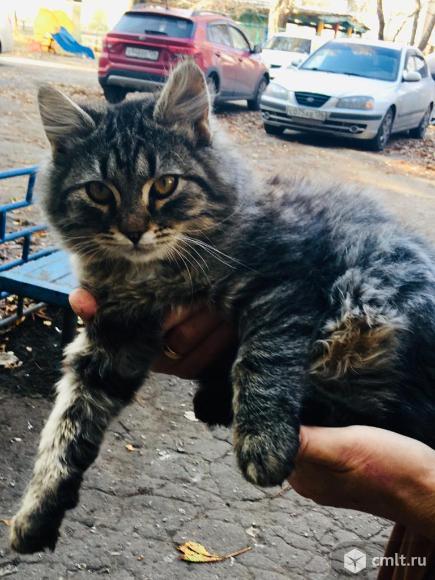 Ищет дом котенок-мальчик. Фото 1.