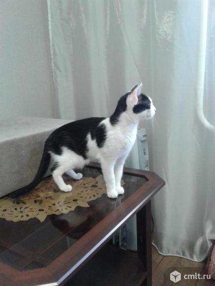 Кошечка в ответственные  руки. Фото 1.