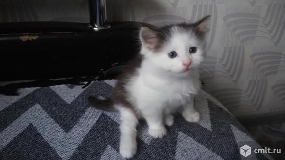 Котенок в добрые руки.. Фото 1.