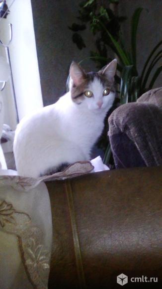 Отдам даром котят!!!. Фото 1.