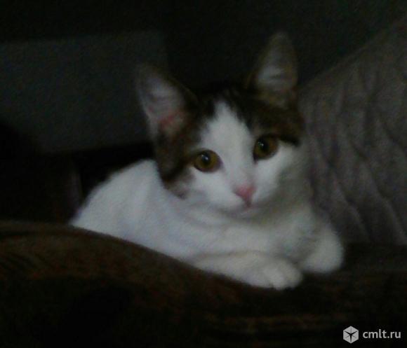 Отдам даром котят!!!. Фото 6.