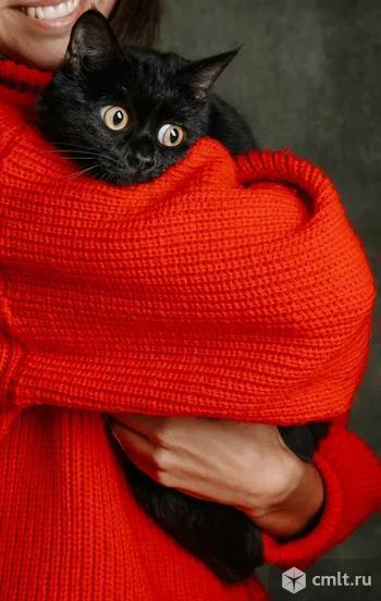 Мася ждет хозяина в приюте. Фото 1.