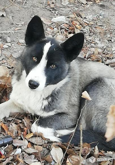 Красивый пёс в дар. Фото 1.