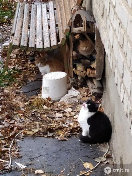 Очаровательные котята покорят ваше сердце. Фото 1.