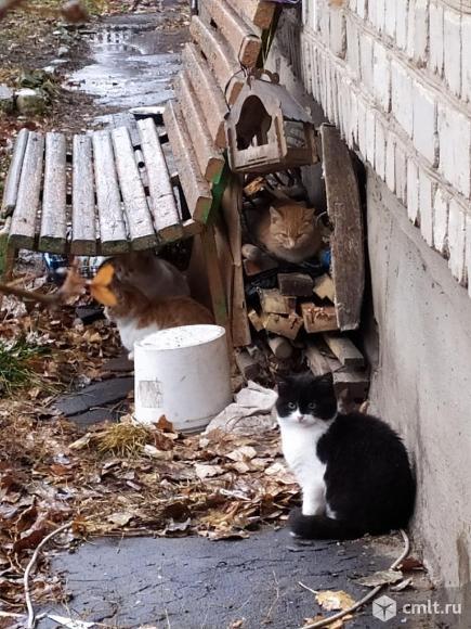 Очаровательные котята покорят ваше сердце. Фото 4.