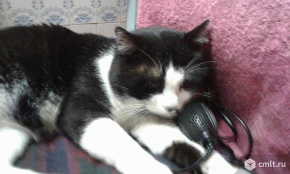 Котик. Фото 9.
