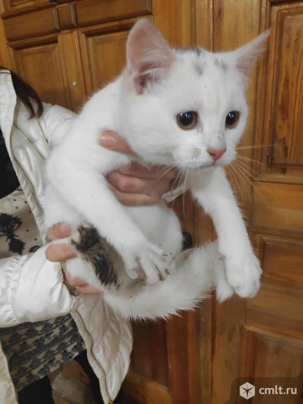 Отдам котенка в добрые руки. Фото 2.