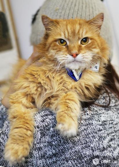 Воспитанный кот Шурик. Фото 8.