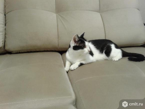 Кошечка ищет своего хозяина. Фото 4.