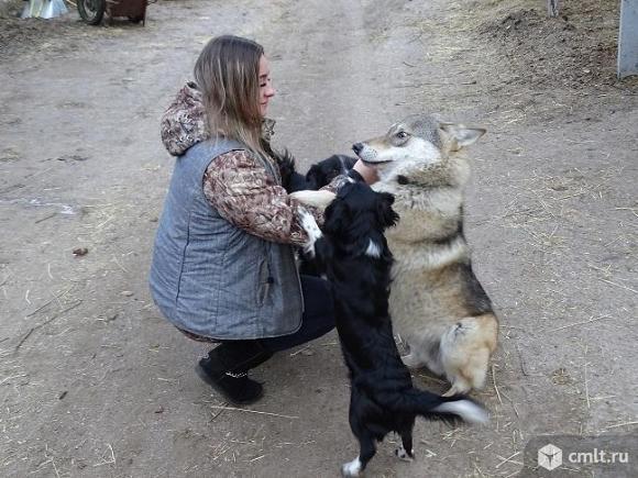 Волк. Фото 6.