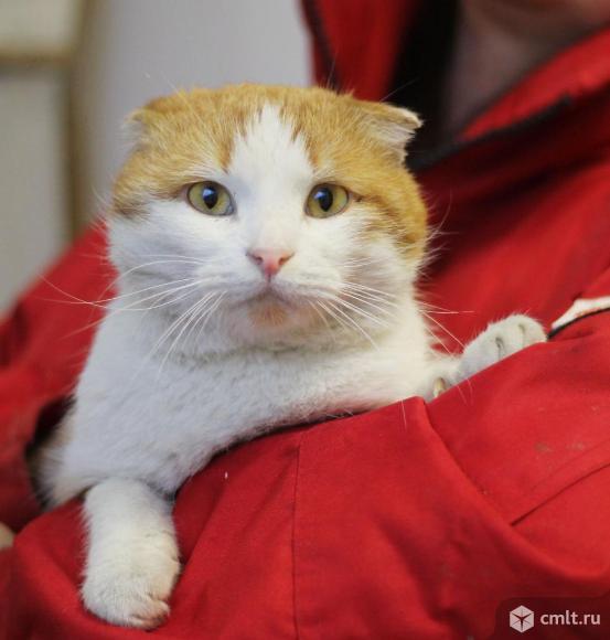 Вислоухий молодой котик Василий. Фото 1.