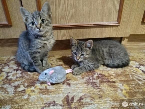 Котята-мальчики 3 месяца. Фото 1.