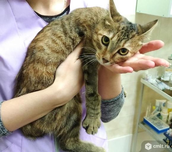 Кошечка Лиса ищет дом. Фото 4.