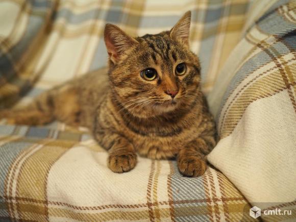 Крупная камышовая мегаласковая кошка в дар. Фото 1.
