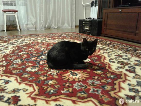 Кошечка черно-белой расцветки. Фото 6.
