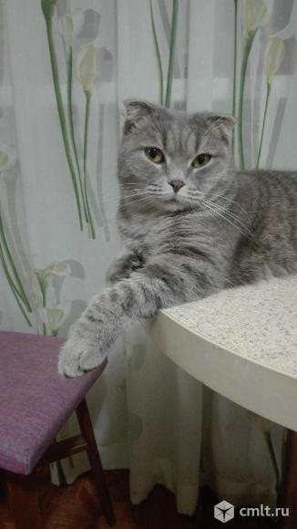 Милая, компанейская вислоухая кошечка ищет дом. Фото 1.