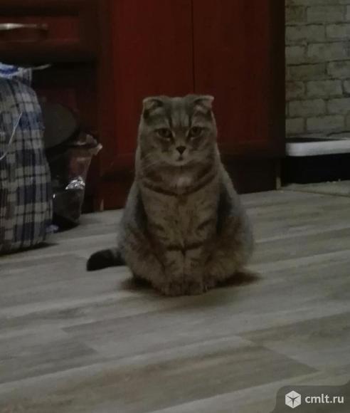 Милая, компанейская вислоухая кошечка ищет дом. Фото 2.