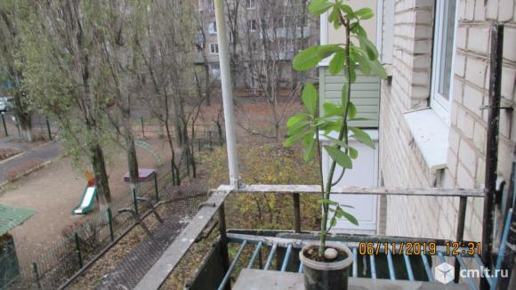 Комнатные растения. Фото 2.