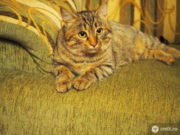Стерилизованная Тигруша в дар. Фото 1.