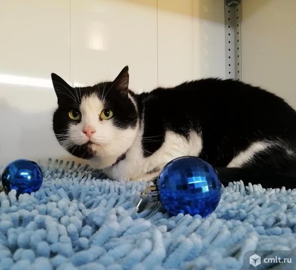 Дакота - кошачья Даная. Фото 1.