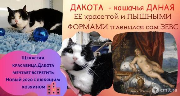 Дакота - кошачья Даная. Фото 3.