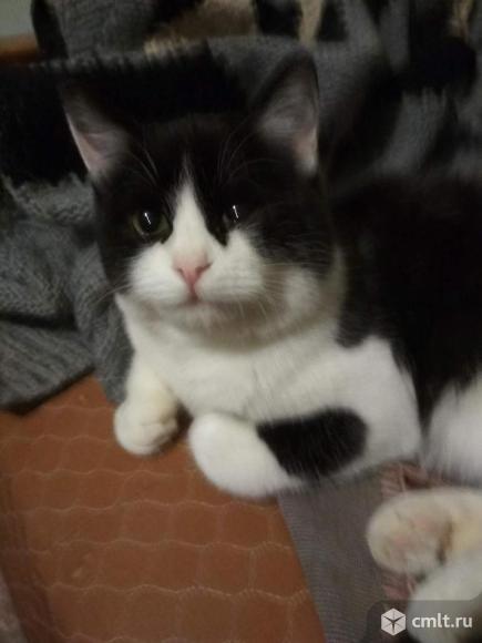Отдам котика в добрые руки. Фото 1.