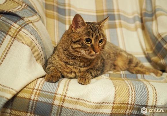 Интерьерная спокойная кошка в дар. Фото 1.