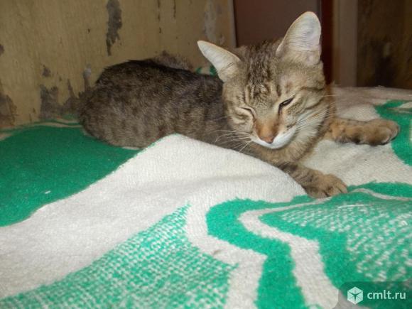 Котята - крысоловы. Фото 4.