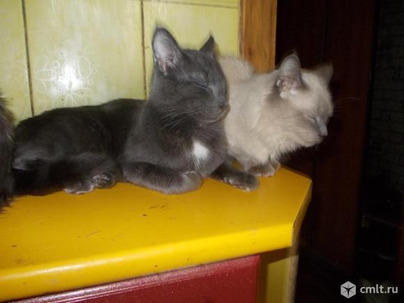 Красивый кот в добрые руки. Фото 1.
