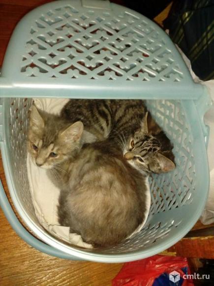 Котята в хорошие руки или на передержку. Фото 1.