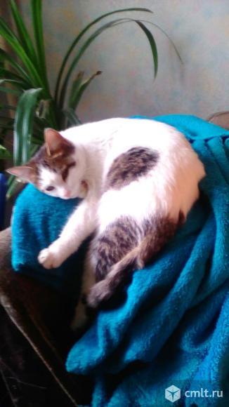 Отдам котят даром!!!. Фото 3.