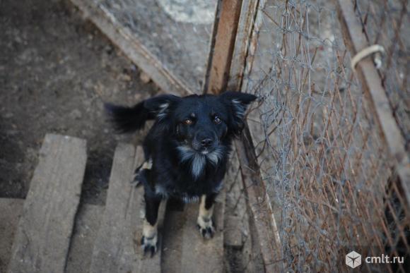 Собачка Чика ищет дом. Фото 1.