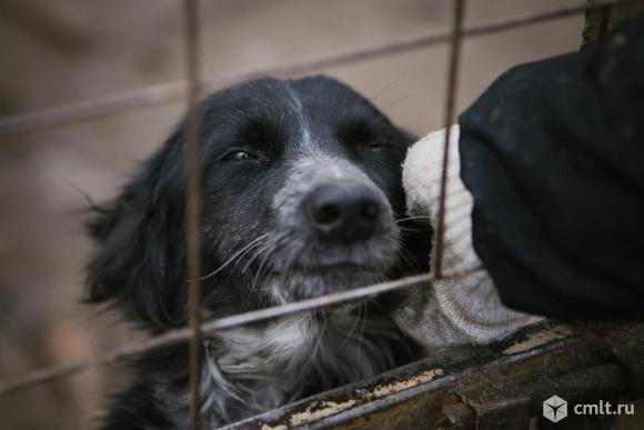 Собачка ищет дом. Фото 1.