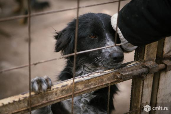 Собачка ищет дом. Фото 2.