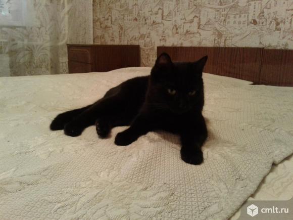 Кошка черного окраса в добрые руки. Фото 1.