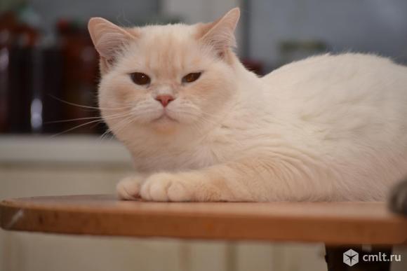 Отдам кота в добрые руки. Фото 1.