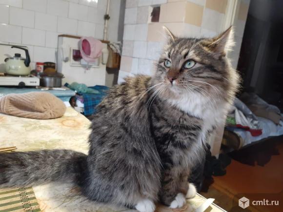 Кошечка Устина. Фото 1.