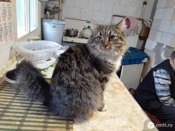 Кошечка Устина. Фото 2.