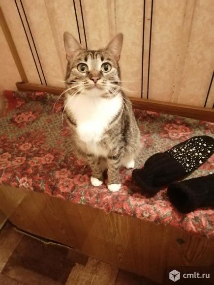 Молодая очаровательная кошечка Бася ждёт любящих надёжных хозяев. Фото 1.