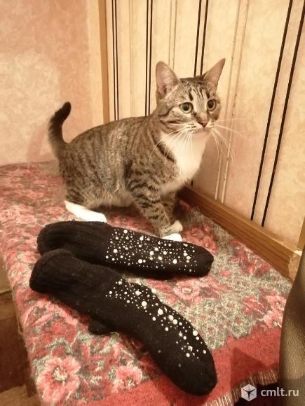 Молодая очаровательная кошечка Бася ждёт любящих надёжных хозяев. Фото 3.