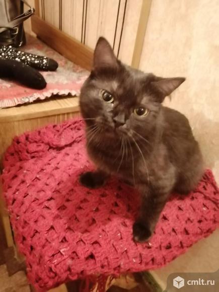 Кошечка-подросток красавица Сима - в ответствнные руки. Фото 1.
