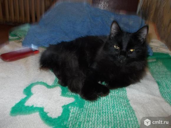 Коты и кошки из приюта для животных. Фото 8.