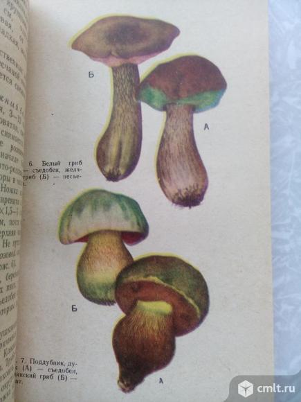 Съедобные и ядовитые грибы Центрального Черноземья. Фото 5.