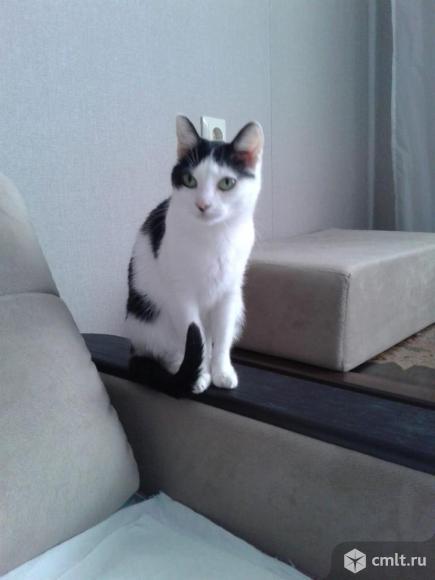 Кошечка в ответственные руки. Фото 5.