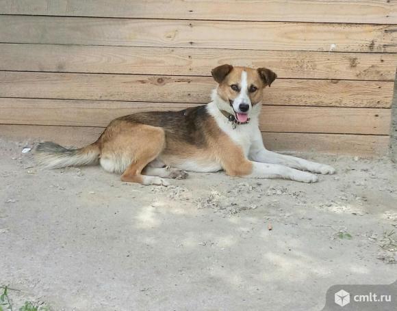 Мегапозитивный пес ищет дом и хозяина. Фото 1.