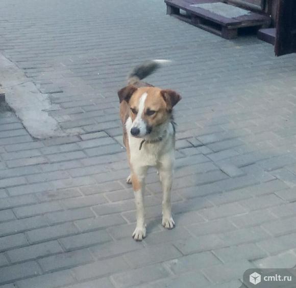 Мегапозитивный пес ищет дом и хозяина. Фото 3.