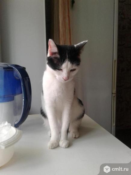 Подрощенный котенок (девочка). Фото 1.