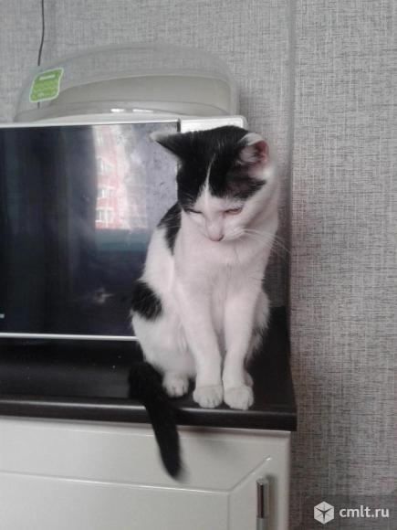 Подрощенный котенок (девочка). Фото 4.