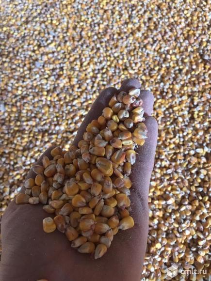 Продам ячмень, пшеницу, кукурузу,зерносмесь , овес. Фото 1.